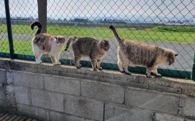 8 Août : Bonne fête les chats !