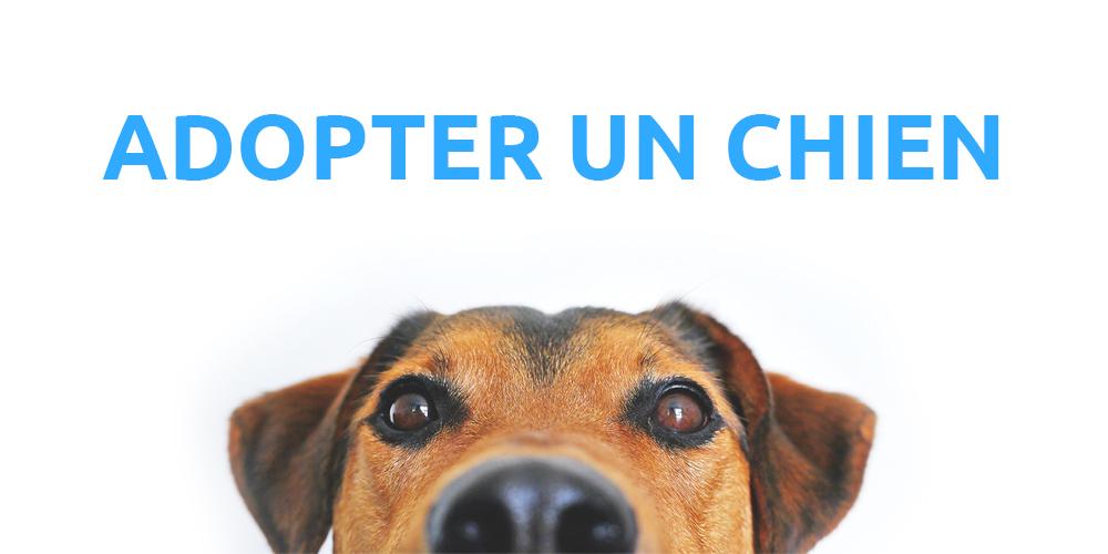 Accueillir Un Animal Association Protectrice Des Animaux 63
