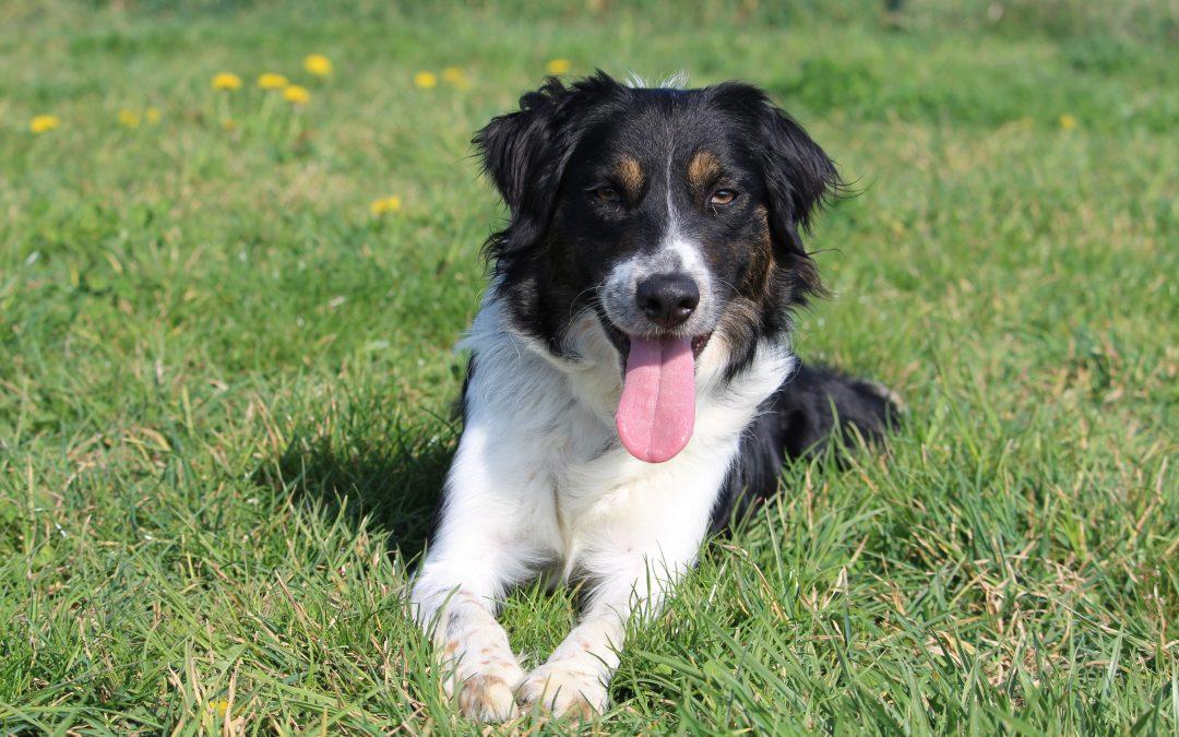 10 bonnes raisons d'adopter un chien