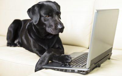 Journal de bord des chiens : le retour !