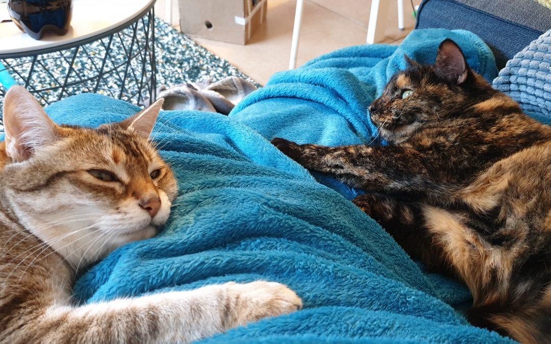 10 bonnes raisons d'adopter un chat (autres que «c'est trop mignon!»)