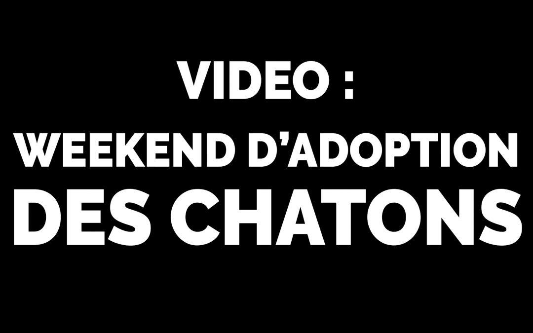 Retour en vidéo : Weekend d'adoption des chatons