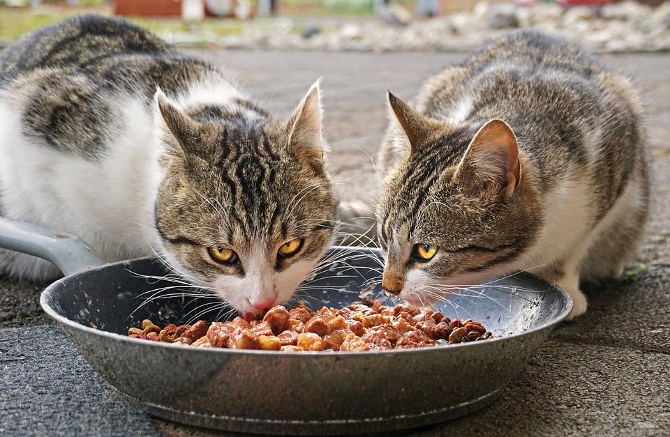 APPEL AUX DONS : Les chats ont besoin de vous !