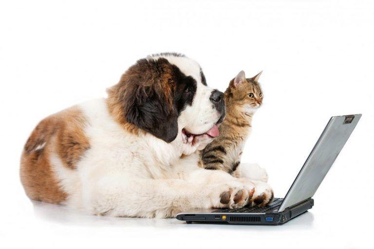 Journal de bord des chiens (et des chats) : la suite