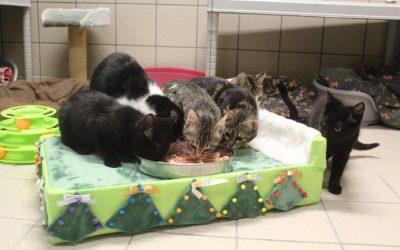 Noël des animaux !