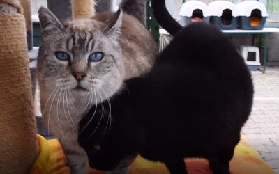 Découverte vidéo : l'enclos des chats sauvages.