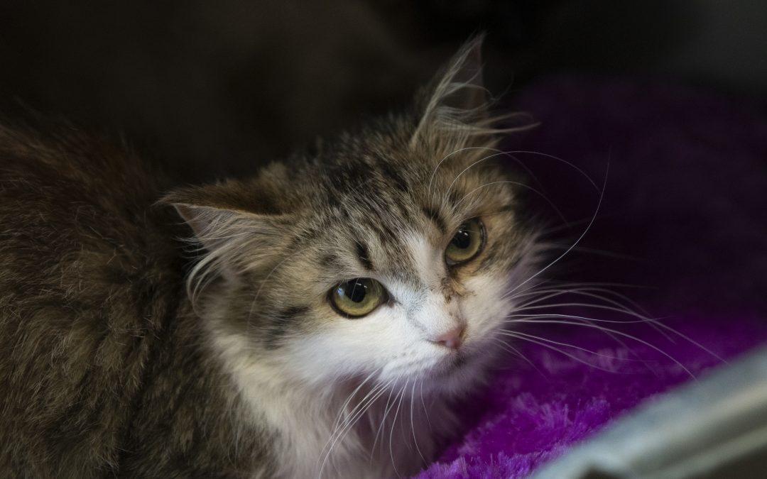 Appel d'urgence : adoptions de chats ! (vidéo)