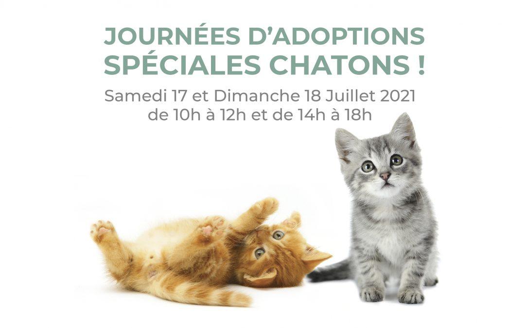 Journées d'adoption des chatons !
