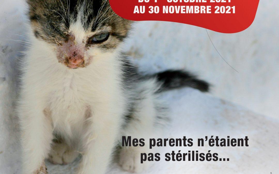 Campagne de stérilisation !